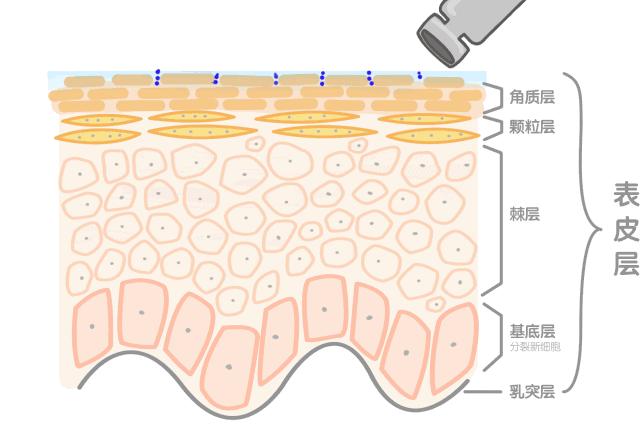 肌肤表皮层